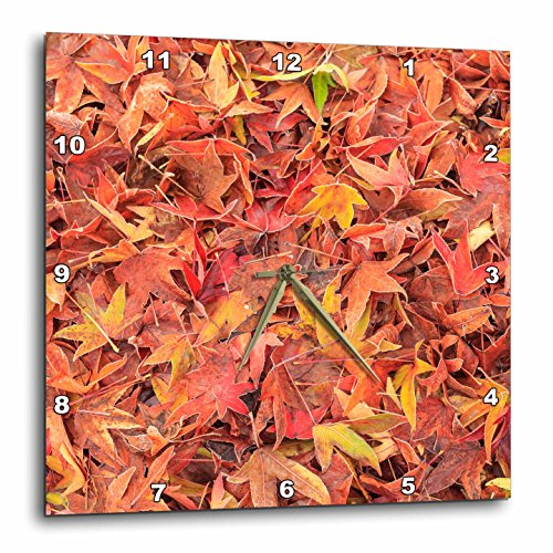 Danita Delimont - Autumn - Autumn color, maple leaves, Mill Creek, Washington State, USA - 15x15 Wall Clock (dpp_231821_3)