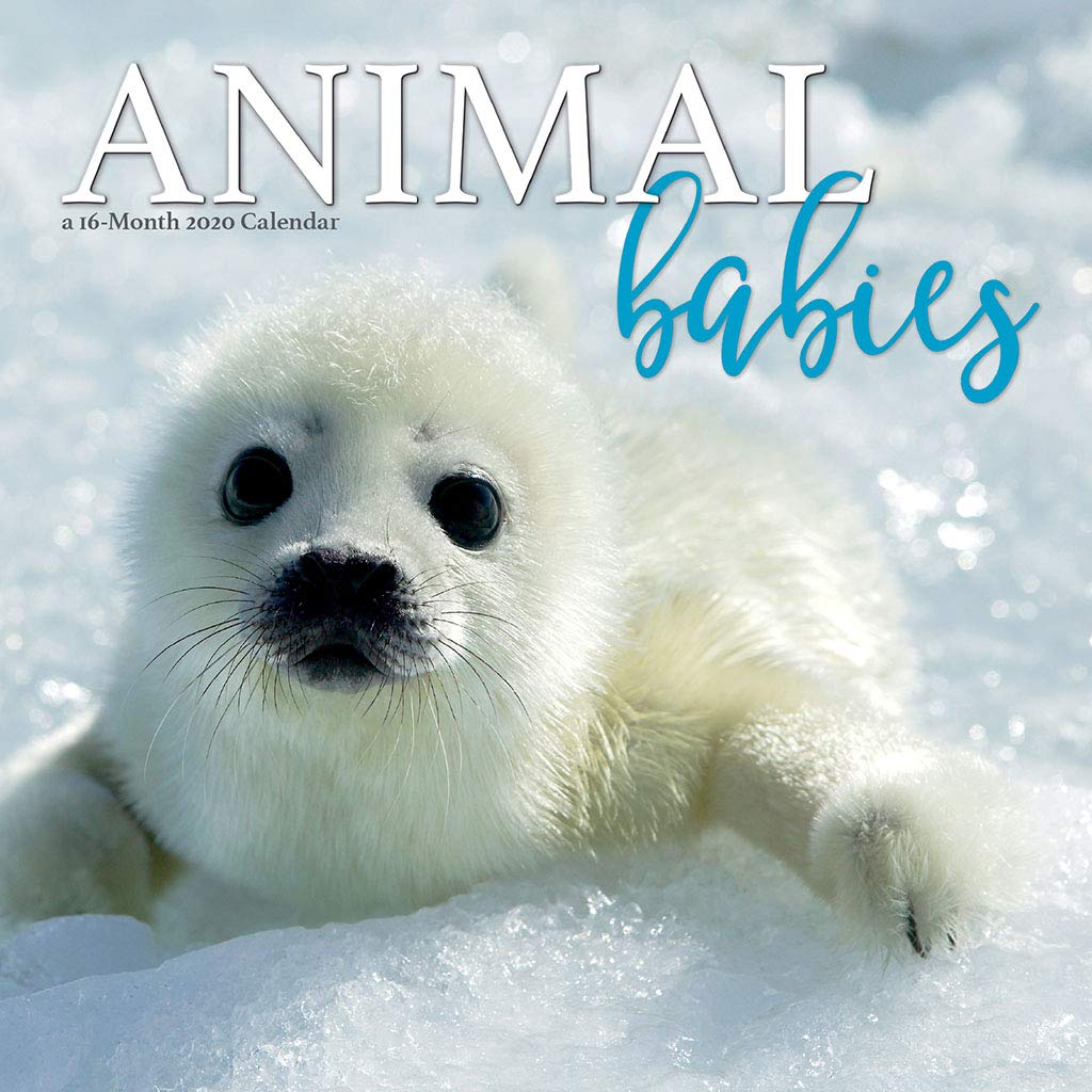 Animal Babies 2020 Wall Calendar Trends International 9781438869322 Amazon Com Books