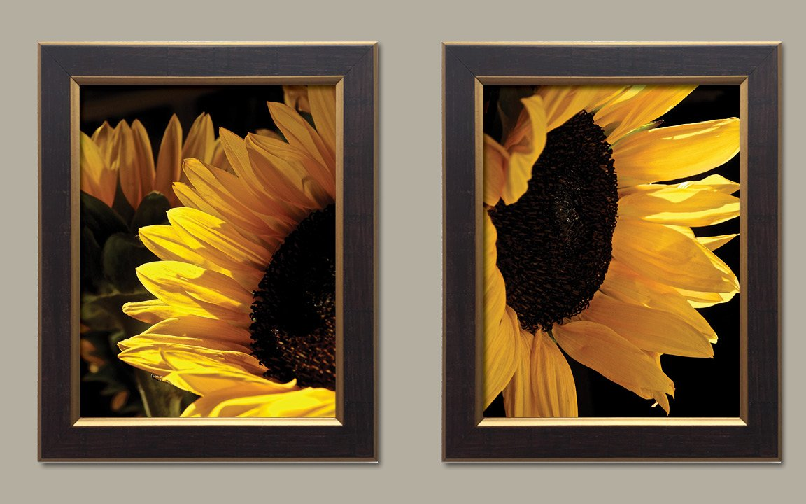 Sunlit Sunflowers | Gorgeous Blooming Yellow and Brown Sunflower Photograph Print; Two 11x14in Gold Trim Brown Framed Prints; Ready to hang! by Gango Home Décor