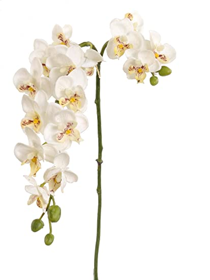 """4593b9010a Image Unavailable. Image not available for. Color: Afloral Real Touch Mini  Orchid Blooms in White - 23"""" Tall"""