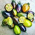 "Brad's Atomic Grape Tomato Plant - Rainbow of Color - 4"" Pot"