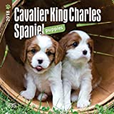 Cavalier King Charles Spaniel Puppies 2018 7 x 7 Inch Monthly Mini Wall Calendar, Animals Dog Breeds Puppies (Multilingual Edition)