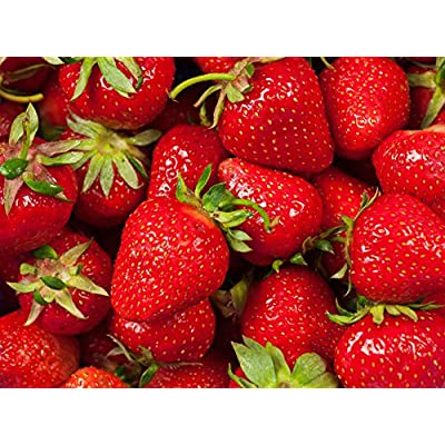 10 Fort Laramie Ever Bearing Strawberry Plants - Great for Northern Areas - Price Includes : Garden & Outdoor
