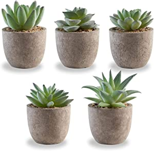 Korvea Set of 5 Artificial Succulent Plants - Mini Assorted Fake Succulents - Small Artificial Plants in Pots for Home Decor Indoor - Fake Plants for Window Sills, Bathrooms, Office Spaces, and More