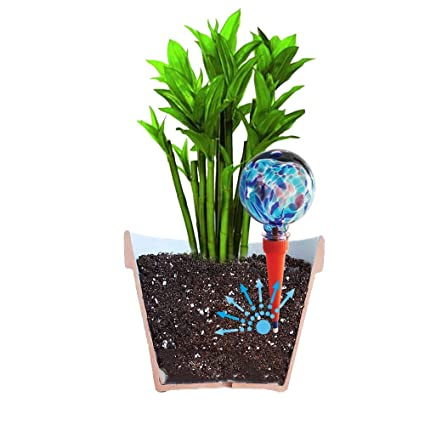 Plantpal 2 Mini Decorative Glass Watering Globes, Plant Watering, Self  Watering, Automatic Watering, Watering Spikes, Holiday Watering System  Use  in