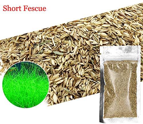 Aquarium Grass Plants Seeds,Aquatic Fescue Carpet Water Grass,Oxygenating Weed Live Pond Plant Seeds,Fish Aquatic Water Grass Decor,Easy to Plant Grow Maintain-10G (Green-Short F)