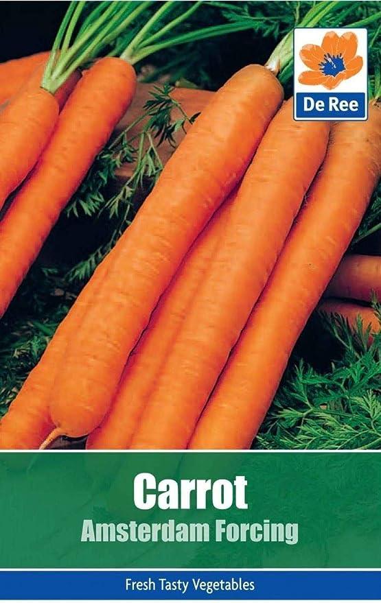 Portal Cool 2 paquetes de zanahoria Ãmsterdam Forzando Semillas ...