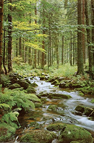 Forest Creek Poster 24 x 36in
