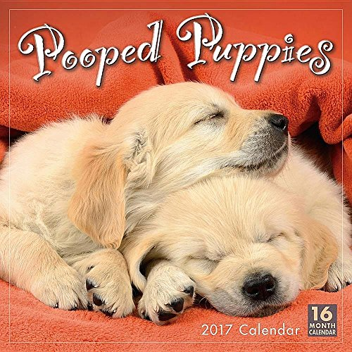 Pooped Puppies 2017 Wall Calendar