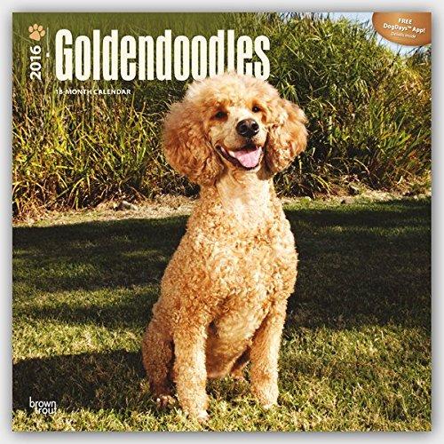 Goldendoodles 2016 - 18-Monatskalender mit freier DogDays-App: Original BrownTrout-Kalender [Mehrsprachig] [Kalender] (Wall-Kalender)