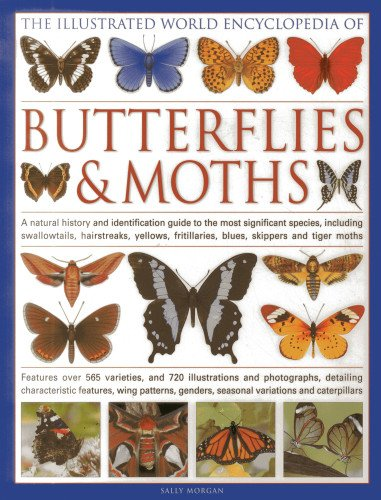 the-illustrated-world-encyclopedia-of-butterflies-and-moths-a-natural-history-and-identification-gui
