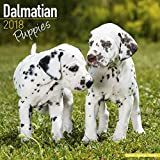 Dalmatian Puppies Calendar - Dog Breed Calendars - 2017 - 2018 wall Calendars - 16 Month by Avonside