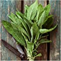Package of 100 Seeds, Broad Leaved Sage Herb (Salvia officinalis) Non-GMO Seeds by Seed Needs)