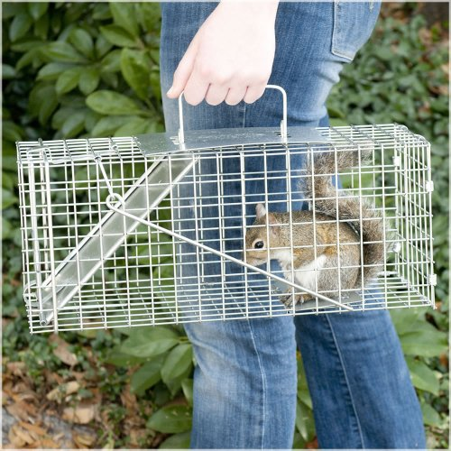 Havahart Small Professional Style One-Door Animal Trap for Squirrel, Rabbit, Skunk, and Mink  - 1077-Made in the USA