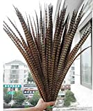 Wholesale 10/50/100 pcs natural pheasant tail feathers 50 -55 cm /20-22 inch Wedding Set Party decoration household products Dance performance DIY