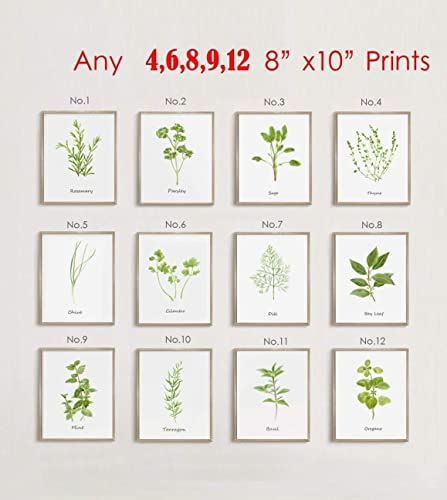 Amazon.com: Wall Art For Kitchen, Set Of Herb Painting Print ...