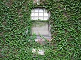 40 Pcs/bag Creeper Ivy Seeds Plant Seeds For Hedera Helix