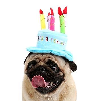 Amazon.com: Dora - Gorro de cumpleaños para perro, gato ...