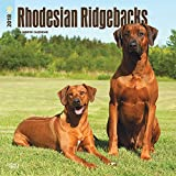 Rhodesian Ridgebacks 2018 12 x 12 Inch Monthly Square Wall Calendar, Animals Dog Breeds (Multilingual Edition)