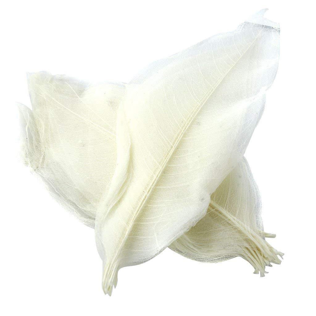 Yevison Premium Quality Pack of 50 Natural Skeleton Leaves Scrapbooking Craft DIY Wedding Invitation White