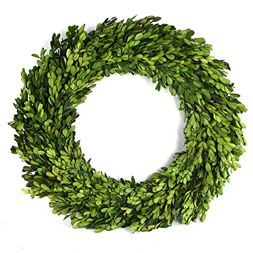 BoxWoodLand Real Boxwood Plant Wreath, Ball, Cone Tree, Wedding Home Decoration, Realistic Full Green Plant, Indoor Décor(Wreath, 22'')