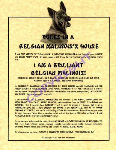 Rules In A Belgian Malinois