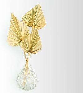 Boho City Blooms Dried Palm Spears | 5 pcs 14-18 in Premium Natural Dried Palm Fans | Boho Decor | Neutral Home | House Decor | Wedding Decor | Leaves + Flower + Leaf Decor