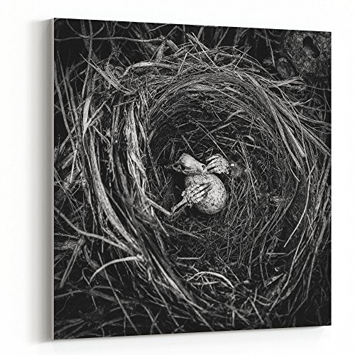 Westlake Art - Nest Monochrome - 16x16 Canvas Print Wall Art - Canvas Stretched Gallery Wrap Modern Picture Photography Artwork - Ready to Hang 16x16 Inch (Mole Skeleton)