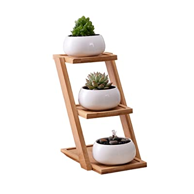 Hopfay Ceramic Round Succulent Plant Flower Pot Planter for Succulent Cactus Herbs Pot with Tray for Home/Office Décor : Garden & Outdoor