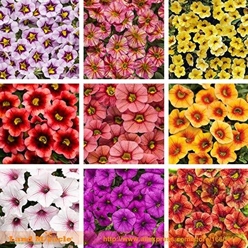 Organic Petunia Seed, 200 Seed/Pack, Mixed39;Garden Petunia39; Very Beautiful Flower Seed-WANCHEN ()