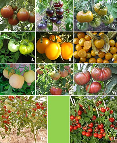 Seeds of Tomato Variety Pack - 11 Rare Heirlooms, Diverse Colors, Tastes & Shapes!