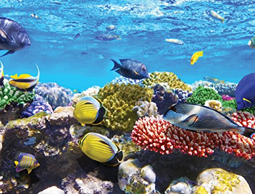 JP London PMURLT2384 Prepasted Removable Wall Mural Undersea Coral Reef Find Fish Nemo, 4' x (4' Mural)