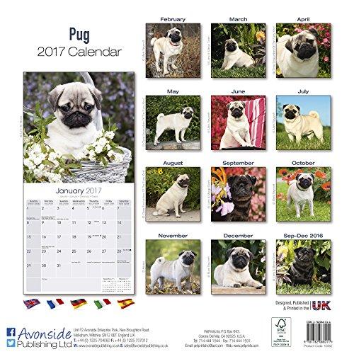 Pug-Calendar-2017-Dog-Breed-Calendars-2016-2017-wall-calendars-16-Month-by-Avonside