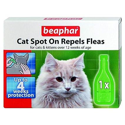 Beaphar Spot repele la pulgas de gato 4 wk: Amazon.es ...