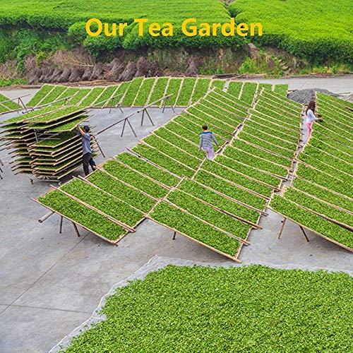 Yan Hou Tang Organic Taiwan Oolong Green Tea Wen Shan Baozhong Pouchong Loose Leaf Licorice Coconut 75g 25 Servings - Half Fermented Formosa High Mountain Simliar Chinese LongJing Tea Unique Feature Weight Loss