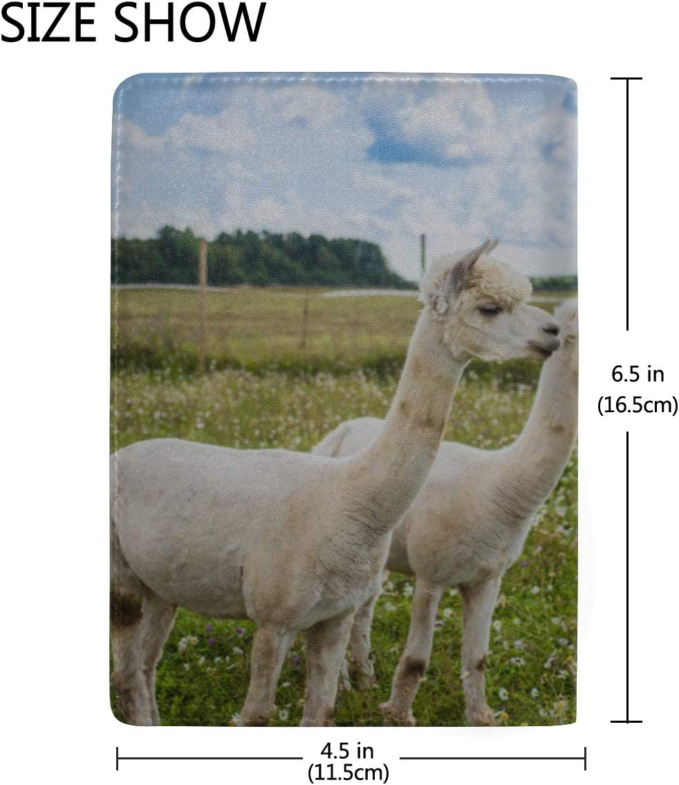 Close Up Portrait Of Two Cute Alpacas Blocking Print Passport Holder Cover Case Travel Luggage Passport Wallet Card Holder Made With Leather For Men Women Kids Family