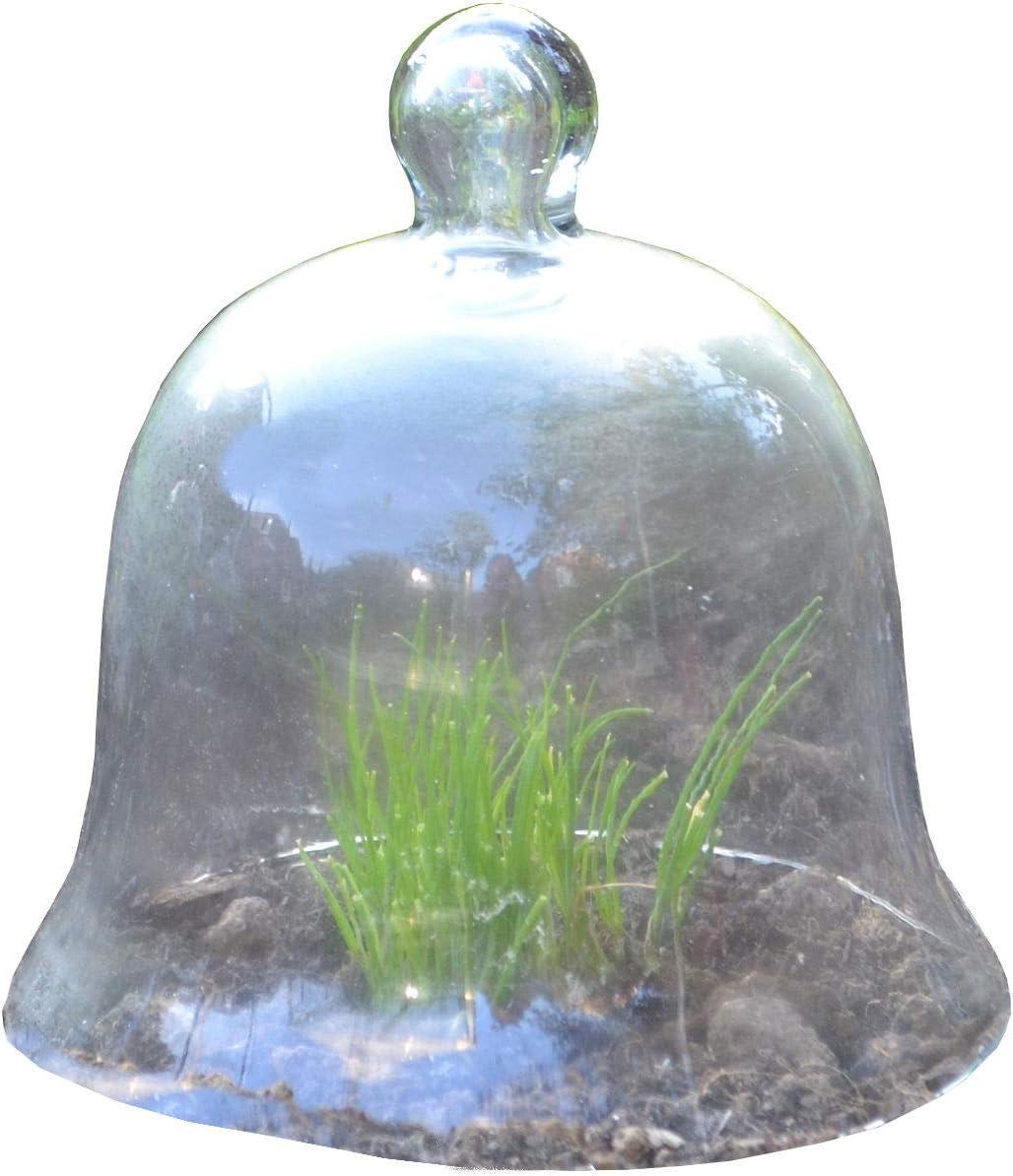 Glasglocke Cloche Glocke aus Glas 20cm