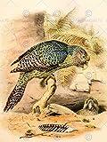PAINTING ANIMAL PORTRAIT BIRD HULLMANDEL KAKAPO OWL PARROT ART PRINT LAH620