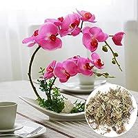Chirsemey Musgo de Sphagnum para Bonsai 6L sustrato