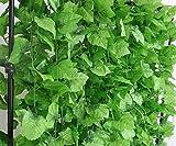 820 FEET ARTIFICIAL Artificial Grape VIne Faux Leaf Plant Faux Ivy Foliage Garlands Party House Kitchen Hotel Decor (100)