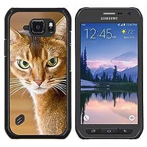TECHCASE---Cubierta de la caja de protección para la piel dura ** Samsung Galaxy S6 Active G890A ** --American Shorthair gato enojado