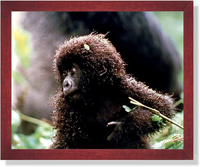 Amazon Com Tropical Baby Gorilla Monkey Animal Wildlife Picture Framed Art Print Posters Prints