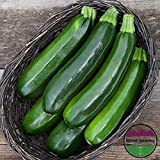 New!! - Black Beauty Zucchini Summer Squash 25