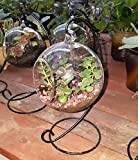 Charming Clear Glass Ball Vase Air Plant Terrarium / Succulent Flowerpot Container w/ Black Metal Stand (Small)