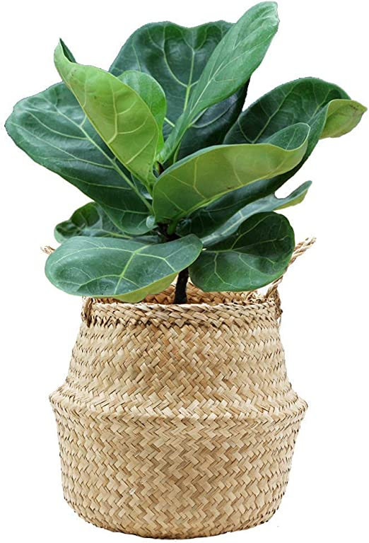 Various Seagrass Belly Basket Natural Storage Plant Pots Laundry Bag Panier