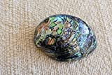 "Polished Paua Abalone Shells (about 5"") Beautiful New Zealand Rainbow Abalone Seashell"