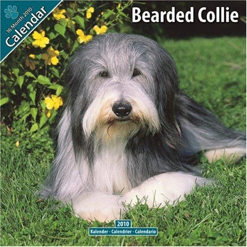 Bearded Collie 2010 Wall Calendar