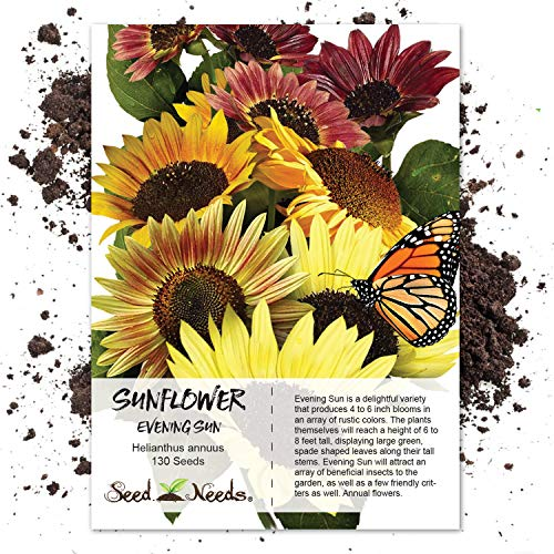 Seeds Sunflower Sowing (130 Sunflower Seeds - Evening Colors (Helianthus annuus) Seeds By Seed Needs)