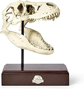Jurassic World Tyrannosaurus Rex Skull Resin Replica - 9x8-Inch TRex Dinosaur Head Statue - Realistic Model Skeleton Decoration - Home & Office Decor, Shelf Display - Decorative Dino Fossil Sculpture