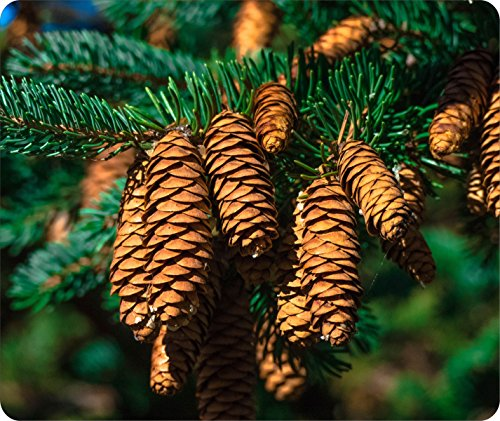 Mouse Pad Fabric Topped Rubber Backed 1/8 Inch Thick Dyed TYD Designs 7.75 x 9.25 Inches Customizable Pine Cone Fir Spruce Conifer Ever Green